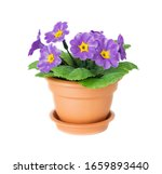 Artificial Houseplant Primrose...
