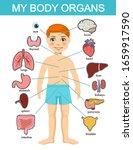 human body anatomy  child... | Shutterstock .eps vector #1659917590