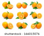 collection of fresh orange... | Shutterstock . vector #166015076