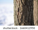 Close Up Of A Tree Trunk With A ...