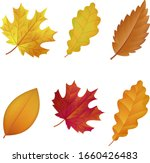 Different Types Of Autumn...