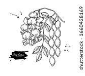 sophora japonica vector drawing....   Shutterstock .eps vector #1660428169