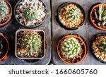 Cactus On The Farm  Product...