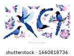 Taiwan Azure Magpie. Set Exotic ...