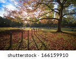 beautiful maple place | Shutterstock . vector #166159910