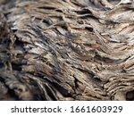 closeup view of vine trunk. old ... | Shutterstock . vector #1661603929