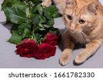 Red Kitten Near Red Roses ...