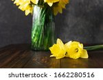 Two Yellow Daffodils Flower And ...