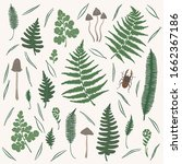 vector set with fern leaf ... | Shutterstock .eps vector #1662367186