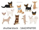 Chihuahua Dogs In Poses....
