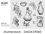 olives  olive branch  olive oil.... | Shutterstock .eps vector #1662619060