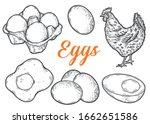 eggs set sketch vector... | Shutterstock .eps vector #1662651586