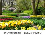 Colorful Spring Flowers In The...