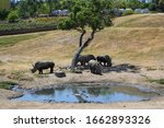A Group Of Two Horned Rhinos...