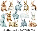 Set Of Cute Bunnies  Isolated...