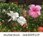 beautiful pink and white... | Shutterstock . vector #1663049119