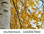 autumn background with yellow... | Shutterstock . vector #1663067860