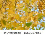autumn background with yellow... | Shutterstock . vector #1663067863