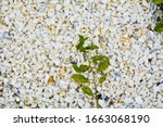 gravel texture of white  yellow ... | Shutterstock . vector #1663068190