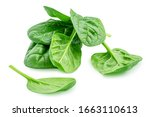 Heap Of Baby Spinach Leaves...