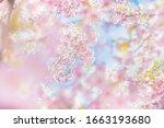 cherry blossoms in full bloom | Shutterstock . vector #1663193680