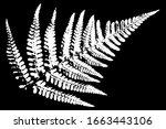 grunge natural fern leaf white... | Shutterstock .eps vector #1663443106