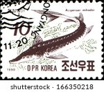 Small photo of DPR KOREA - CIRCA 1990: A post stamp printed in DPR Korea (North Korea) shows sturgeon (Acipenser mikadoi), circa 1990