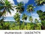 palm trees against blue sky.   Shutterstock . vector #166367474