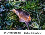 Frozen Leaves On Green Grass....