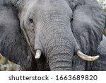 A Bull Elephant Portrait. Take...