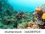 orange lyetail anthias fish... | Shutterstock . vector #166385924