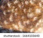 Texture Beautiful Nature Deer...