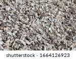 Thousands Of Empty Shells Of...