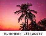 Tall Palm Tree By The Sea On A...
