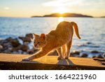 Ginger Cute Cat Stretching A...