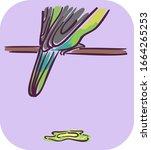 illustration of a pet bird on a ... | Shutterstock .eps vector #1664265253