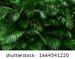 Tropical Palm Leaves  Floral...