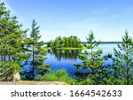 Summer green forest lake view. Forest lake view. Forest lake water