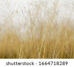 Close Up Of Sea Grasses On Lon...