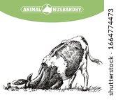 breeding cow. animal husbandry. ...   Shutterstock .eps vector #1664774473