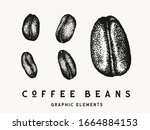 vintage coffee bean isolated... | Shutterstock .eps vector #1664884153