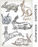 Hand Drawn Rabbit Vector Set