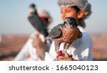 Breeding And Training Omani...
