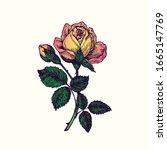 Rose Yellow Pink Flower  Stem...