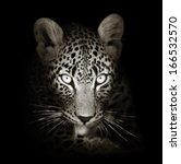 Leopard Face Close Up In Black...