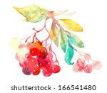 red rowan berries   twig.... | Shutterstock . vector #166541480