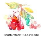 red rowan berries   twig.... | Shutterstock . vector #166541480