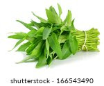 Morning Glory Green Vegetable