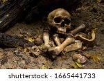 Skull And Bones Buried Of Human ...