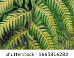 Fern Leaves In The Forest...